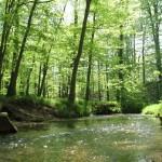 złoty potok czyli trakcje w okolicy - spacery, odpoczynek aktywny, relaks na wsi