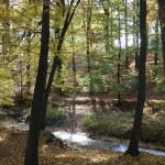 jesień nad potokiem