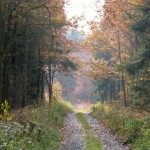 leśne dróżki
