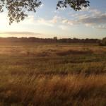 łąki w dolinie Kwisy